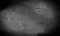 Gravure rupestre dans la grotte d'Aldène